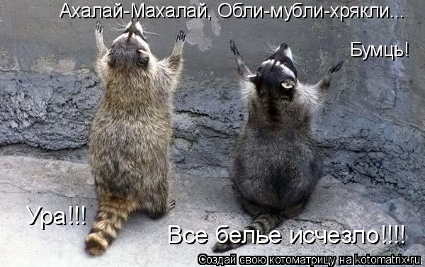 Котоматрица: Ахалай-Махалай, Обли-мубли-хрякли... Бумць! Ура!!!  Все белье исчезло!!!!