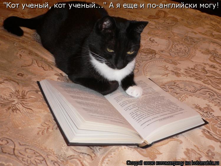 """Котоматрица: """"Кот ученый, кот ученый..."""" А я еще и по-английски могу!"""