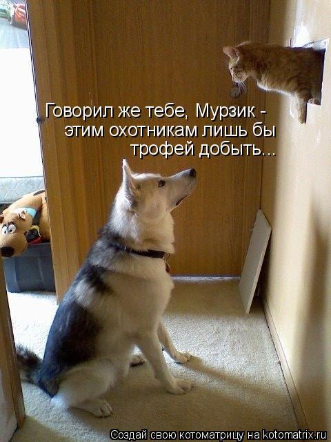 Котоматрица: Говорил же тебе, Мурзик -  этим охотникам лишь бы трофей добыть...