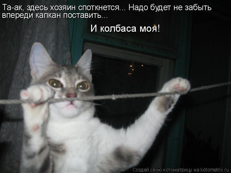 Котоматрица: Та-ак, здесь хозяин споткнется... Надо будет не забыть  впереди капкан поставить...  И колбаса моя!