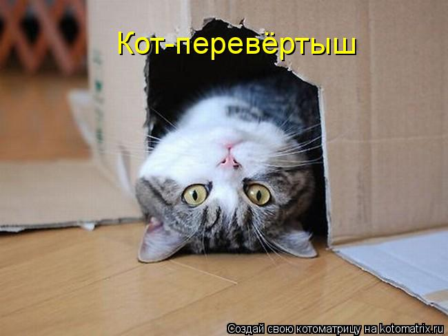Котоматрица: Кот-перевёртыш