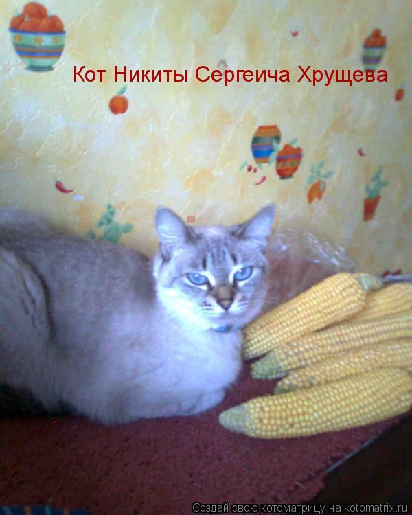 Котоматрица: Кот Никиты Сергеича Хрущева