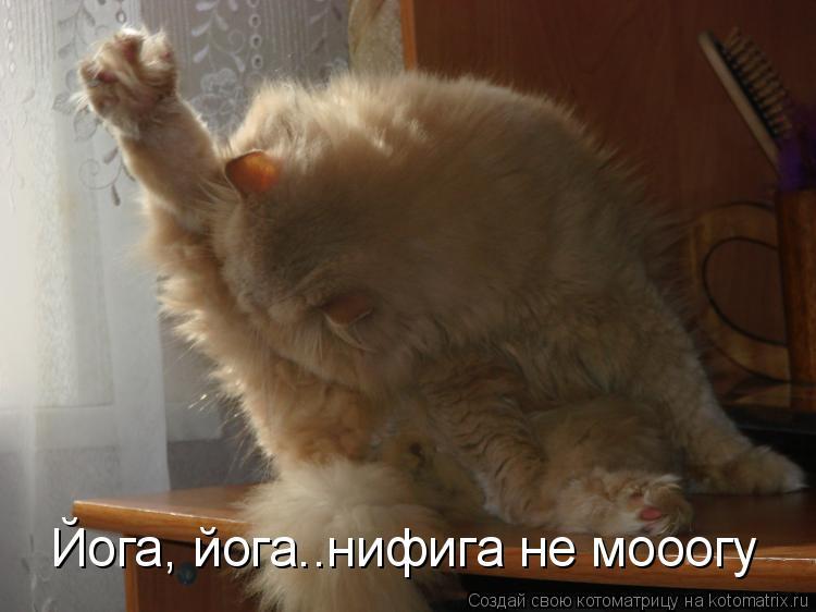 Котоматрица: Йога, йога..нифига не мооогу