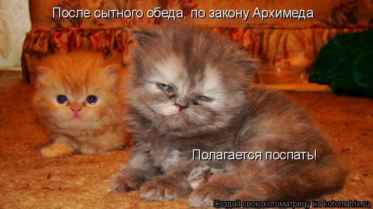 Котоматрица: После сытного обеда, по закону Архимеда Полагается поспать!