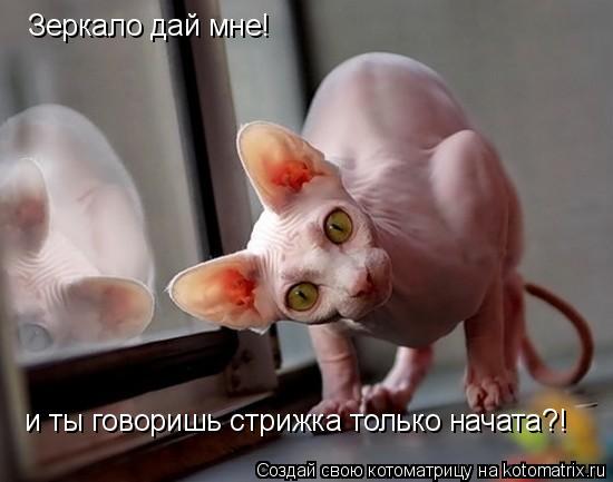 Котоматрица: Зеркало дай мне! и ты говоришь стрижка только начата?!