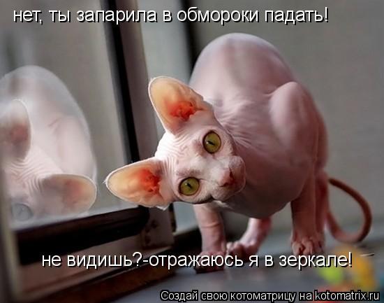 Котоматрица: нет, ты запарила в обмороки падать! не видишь?-отражаюсь я в зеркале!