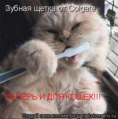 Котоматрица: Зубная щетка от Colgate ТЕПЕРЬ И ДЛЯ КОШЕК!!!