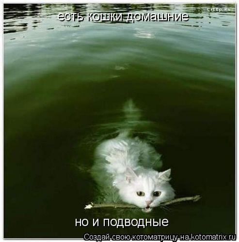 Котоматрица: есть кошки домашние но и подводные