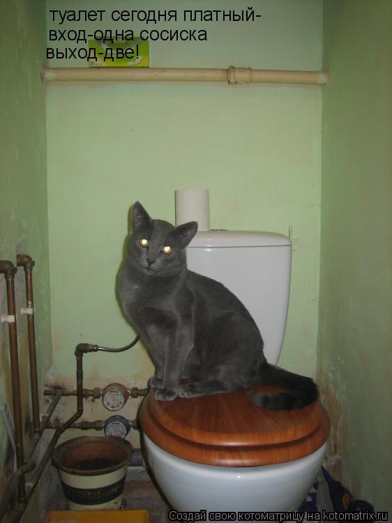 Котоматрица: туалет сегодня платный- вход-одна сосиска выход-две!