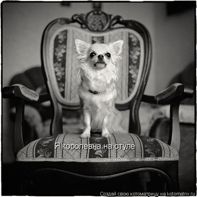 Котоматрица: Я королевна на стуле