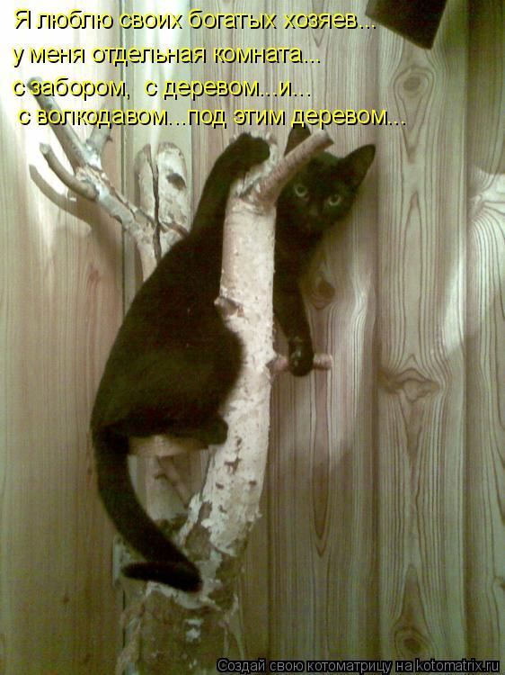 Котоматрица: у меня отдельная комната... с забором,  с деревом...и... с волкодавом...под этим деревом... Я люблю своих богатых хозяев...