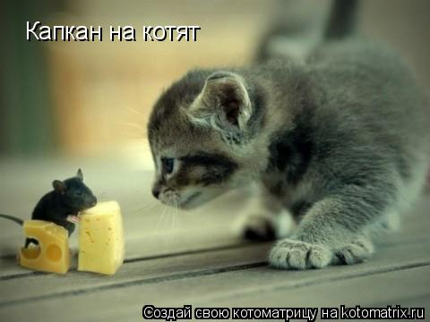 Котоматрица: Капкан на котят