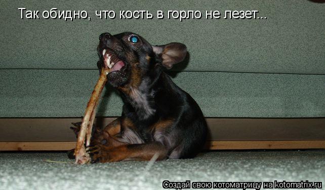 Котоматрица: Так обидно, что кость в горло не лезет...