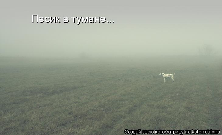 Котоматрица: Песик в тумане...