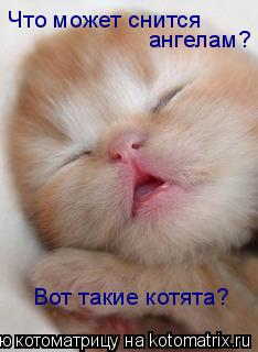 Котоматрица: Что может снится  ангелам? Вот такие котята?