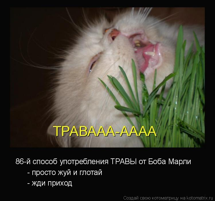 Котоматрица: 86-й способ употребления ТРАВЫ от Боба Марли - просто жуй и глотай - жди приход
