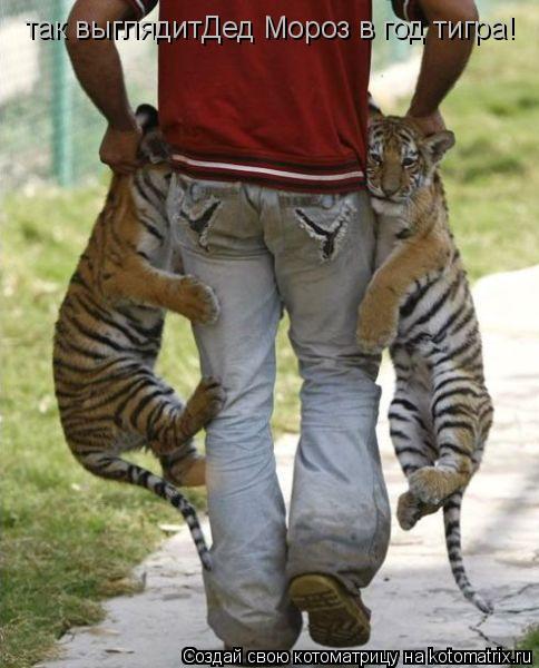 Котоматрица: так выглядитДед Мороз в год тигра!