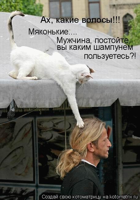 Котоматрица: Мужчина, постойте, пользуетесь?! Мяконькие.... Ах, какие волосы!!!  вы каким шампунем