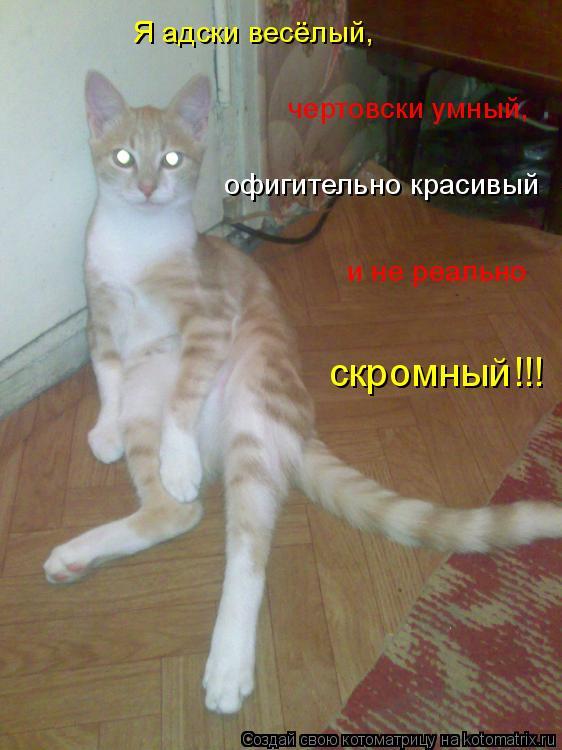 Котоматрица: Я адски весёлый,    чертовски умный,   офигительно красивый   и не реально  скромный!!!