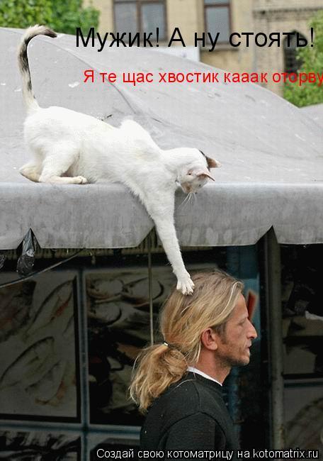 Котоматрица: Мужик! А ну стоять!  Я те щас хвостик кааак оторву!