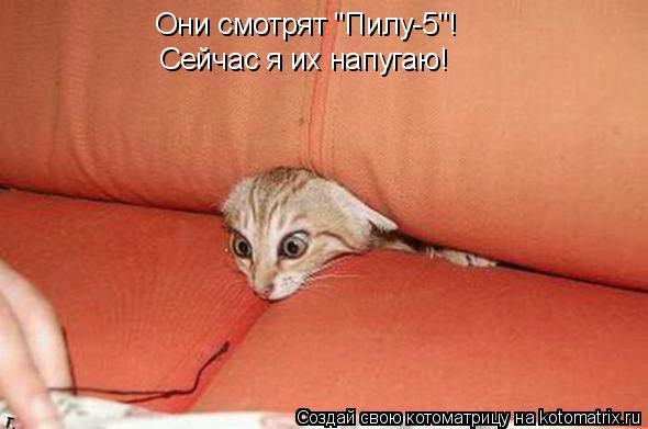 """Котоматрица: Они смотрят """"Пилу-5""""! Сейчас я их напугаю!"""