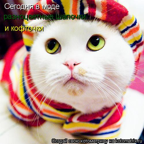 Котоматрица: Сегодня в моде разноцветные шапочки и кофточки