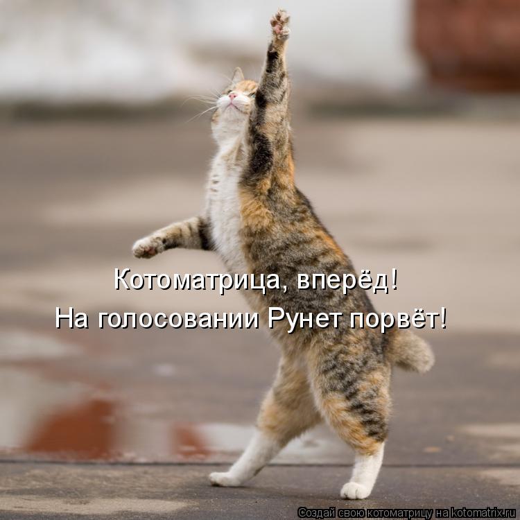 Котоматрица: Котоматрица, вперёд! На голосовании Рунет порвёт!