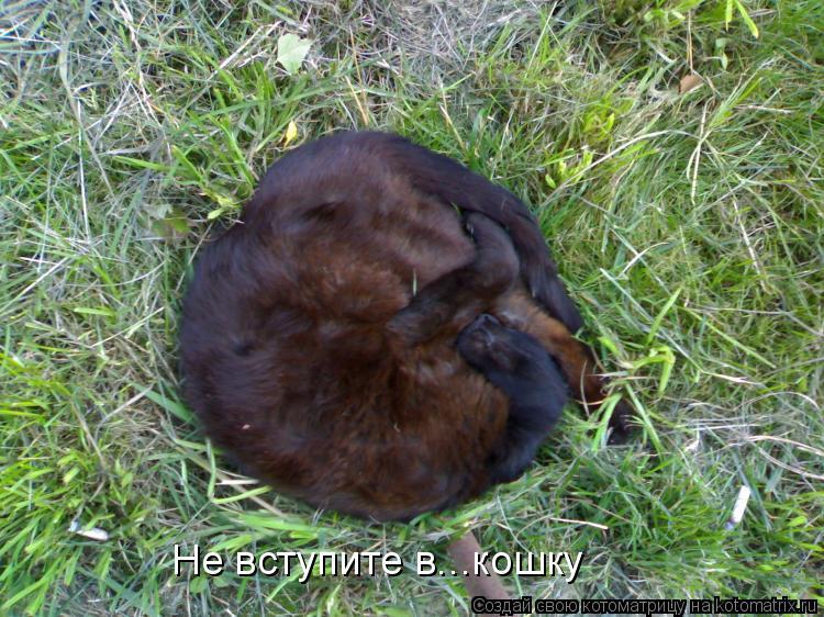 Котоматрица: Не вступите в...кошку