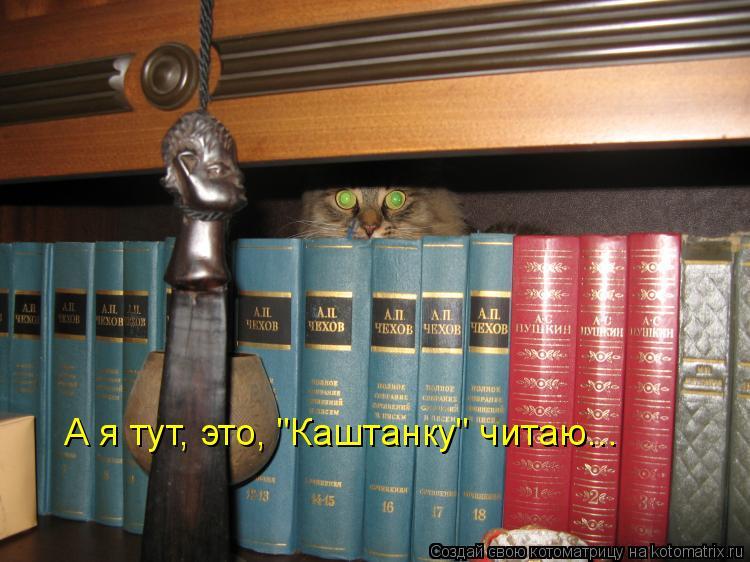 """Котоматрица: А я тут, это, """"Каштанку"""" читаю..."""