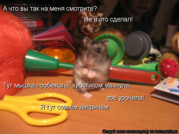 Котоматрица: А что вы так на меня смотрите? Не я это сделал! Тут мышка пробежала, хвостиком махнула, всё уронила! Я тут совсем нипричём
