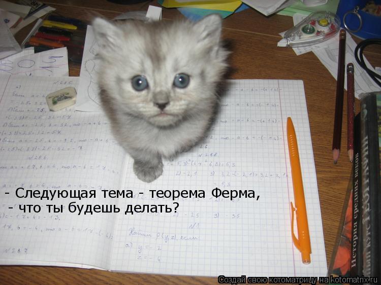 Котоматрица: - Следующая тема - теорема Ферма,  - что ты будешь делать?