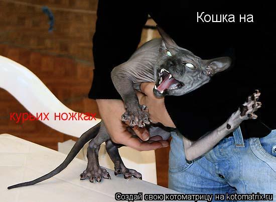 Котоматрица: Кошка на  Кошка на  курьих ножках
