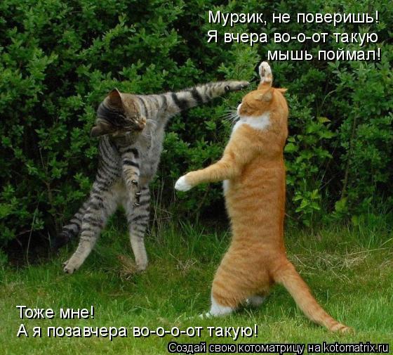 Котоматрица: Мурзик, не поверишь!  Я вчера во-о-от такую мышь поймал! А я позавчера во-о-о-от такую! Тоже мне!