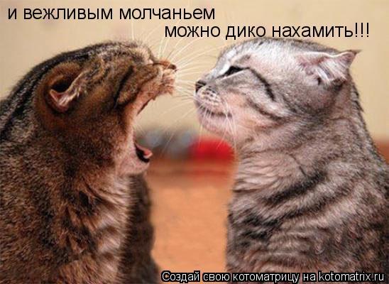 Котоматрица: и вежливым молчаньем можно дико нахамить!!!