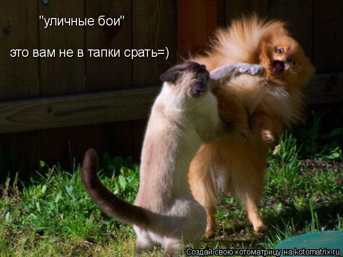 """Котоматрица: """"уличные бои"""" это вам не в тапки срать=)"""