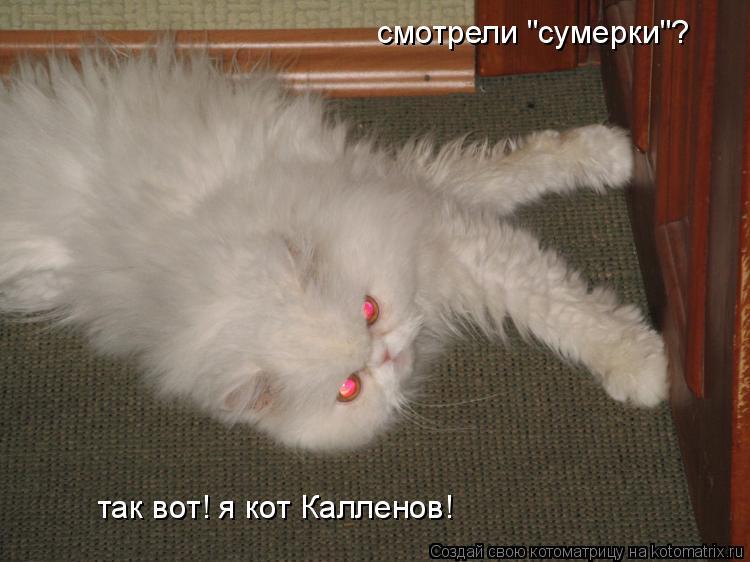 """Котоматрица: смотрели """"сумерки""""? так вот! я кот Калленов!"""