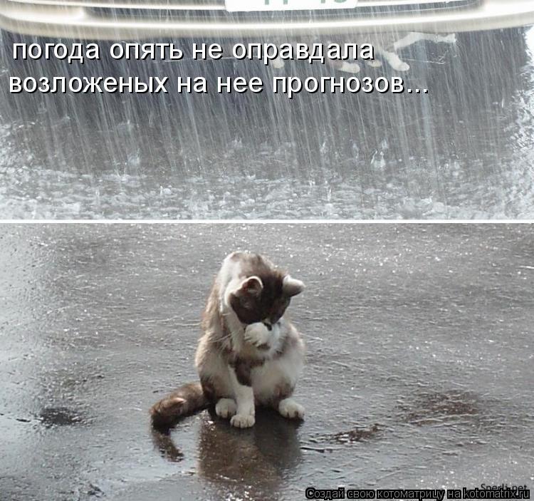Котоматрица: погода опять не оправдала  возложеных на нее прогнозов...
