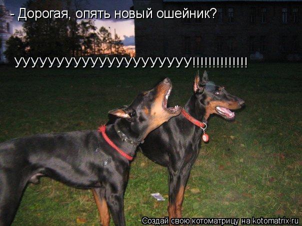 Котоматрица: - Дорогая, опять новый ошейник? УУУУУУУУУУУУУУУУУУУУУ!!!!!!!!!!!!!!