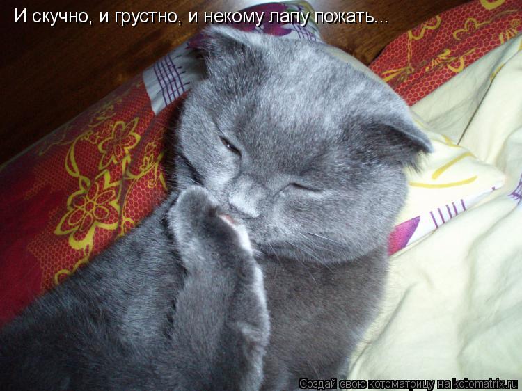 Котоматрица: И скучно, и грустно, и некому лапу пожать...