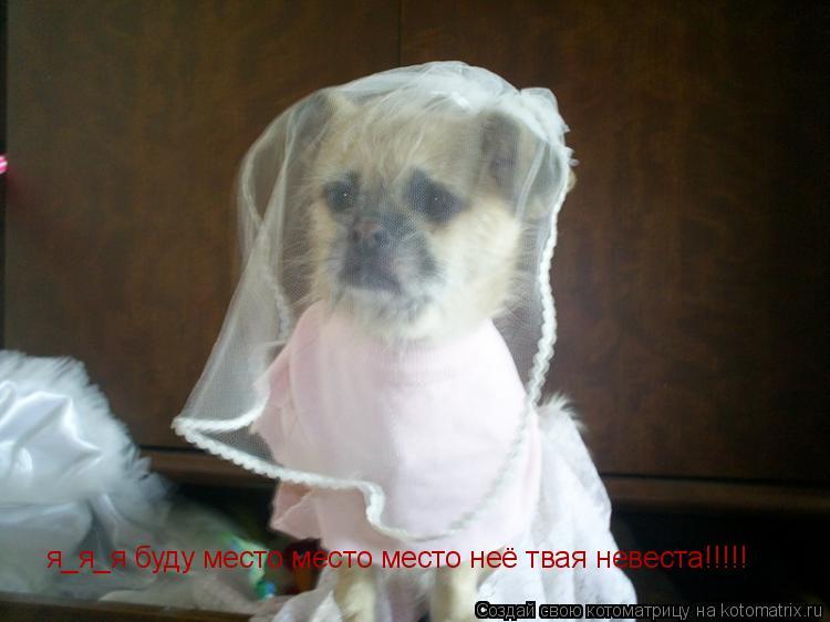 Котоматрица: я_я_я буду место место место неё твая невеста!!!!!