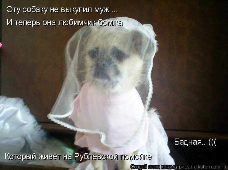 Котоматрица: Эту собаку не выкупил муж.... И теперь она любимчик бомжа Который живёт на Рублёвской помойке Бедная...(((
