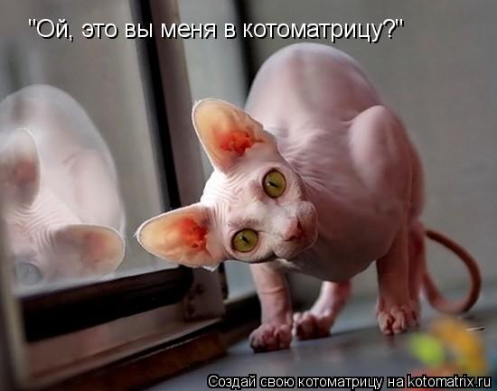 """Котоматрица: """"Ой, это вы меня в котоматрицу?"""""""