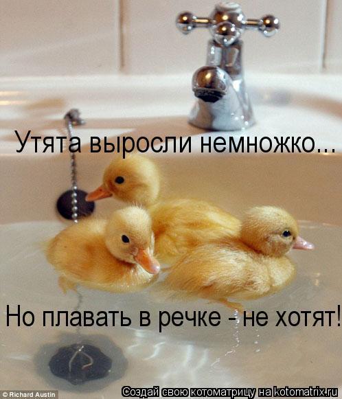 Котоматрица: Утята выросли немножко...   Но плавать в речке - не хотят! Но плавать в речке - не хотят!