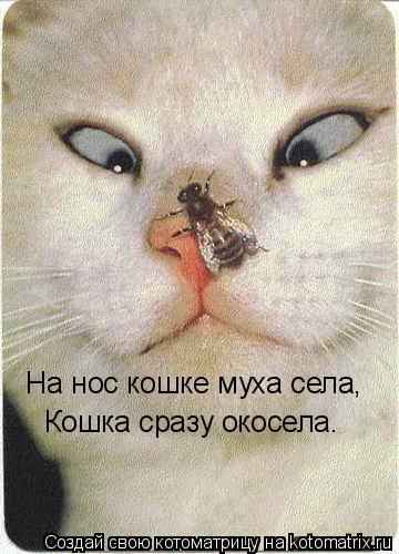 Котоматрица: На нос кошке муха села, Кошка сразу окосела.