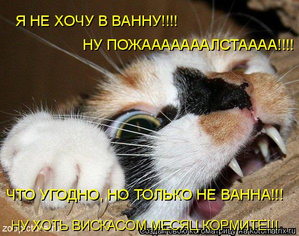 Котоматрица: Я НЕ ХОЧУ В ВАННУ!!!! НУ ПОЖАААААААЛСТАААА!!!! ЧТО УГОДНО, НО ТОЛЬКО НЕ ВАННА!!! НУ ХОТЬ ВИСКАСОМ МЕСЯЦ КОРМИТЕ!!!