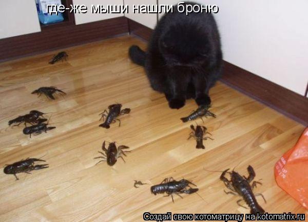 Котоматрица: где-же мыши нашли броню