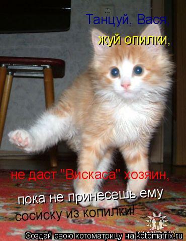 """Котоматрица: Танцуй, Вася, жуй опилки, не даст """"Вискаса"""" хозяин, пока не принесешь ему сосиску из копилки!"""