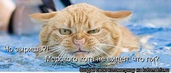 Котоматрица: Чо зыришь?! Морского кота не видел, что ли?
