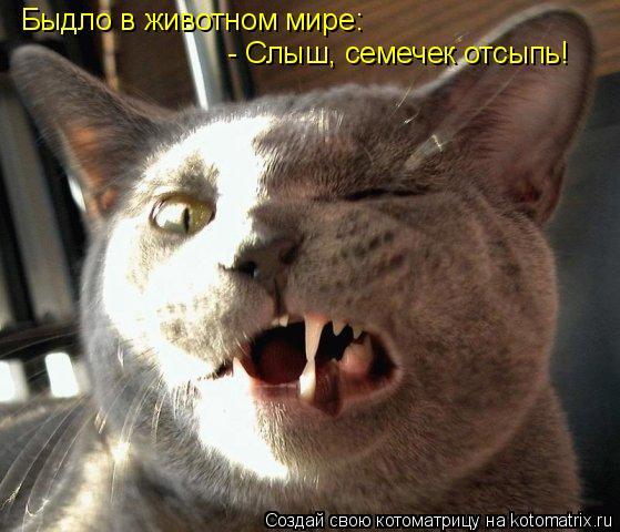Котоматрица: Быдло в животном мире: - Слыш, семечек отсыпь!
