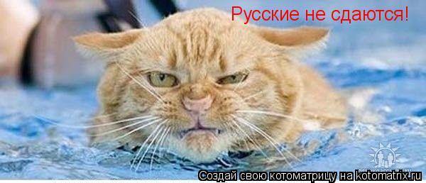 Котоматрица: Русские не сдаются!